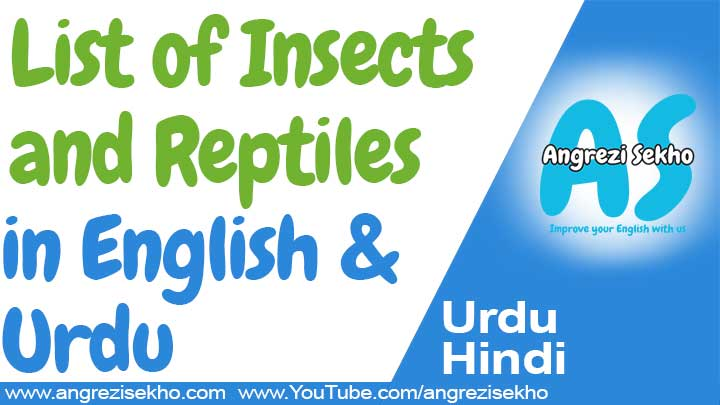 List-of-Insects-and-Reptiles-in-English-and-Urdu