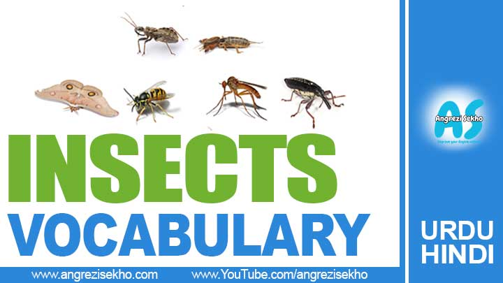 Name-of-Insects-vocabulary-in-urdu-hindi
