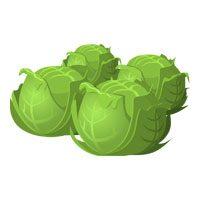 Cabbage-meaning-in-urdu-hindi-band-gobhi-بندگھوبھی