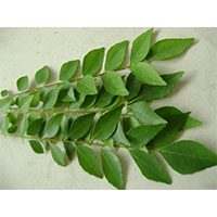 Curry Leaf-meaning-in-urdu-hindi-کریپتہ