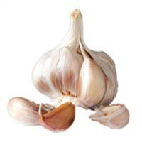 garlic-meaning-in-urdu-and-hindi