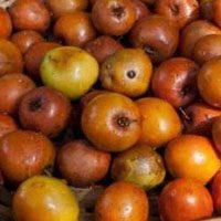 Jujube-Fruit-name-in-urdu