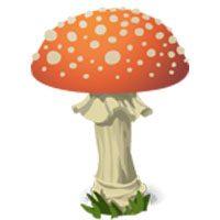 Mushroom-meaning-in-urdu-hindi