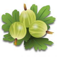 gooseberries-in-urud