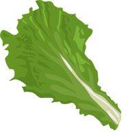 lettuce-meaning-in-urdu-hindi-salad-ke-patay-سلاد کے پتے