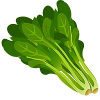spinach-meaning-in-urdu-hindi-palak-پالک